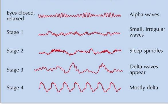 Understanding brain waves - Neurofeedback