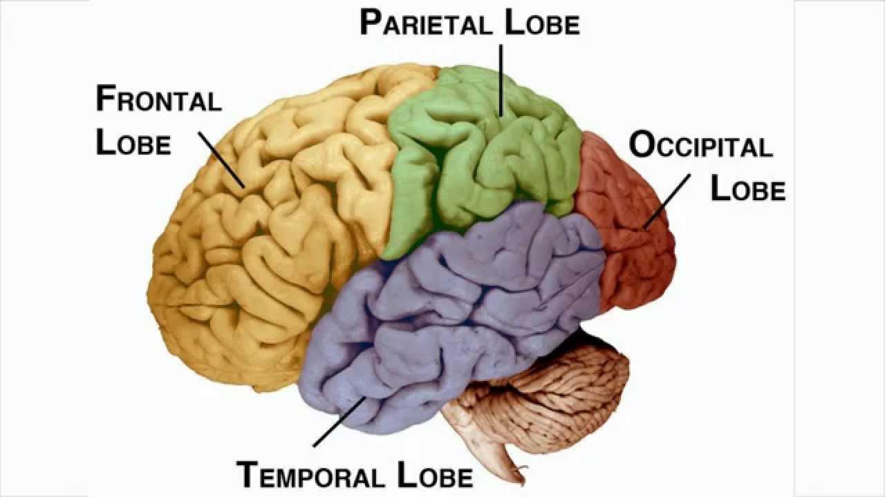 Brain regions and neurofeedback - Neurofeedback ...